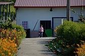 赤科山的金針花:IMGP5237.jpg