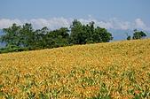 赤科山的金針花:IMGP5290.jpg