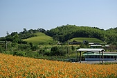 赤科山的金針花:IMGP5238.jpg