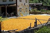赤科山的金針花:IMGP5405.jpg