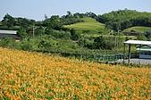 赤科山的金針花:IMGP5292.jpg