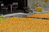 赤科山的金針花:IMGP5406.jpg