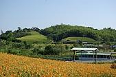 赤科山的金針花:IMGP5239.jpg