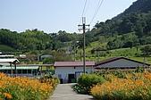 赤科山的金針花:IMGP5311.jpg