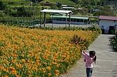 赤科山的金針花:IMGP5293.jpg