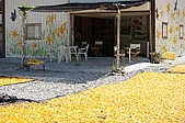 赤科山的金針花:IMGP5408.jpg