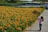 赤科山的金針花:IMGP5294.jpg