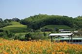 赤科山的金針花:IMGP5312.jpg