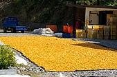 赤科山的金針花:IMGP5409.jpg