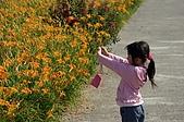 赤科山的金針花:IMGP5295.jpg