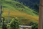 赤科山的金針花:IMGP5410.jpg