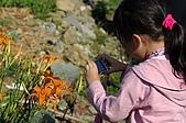 赤科山的金針花:IMGP5271.jpg