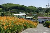 赤科山的金針花:IMGP5313.jpg