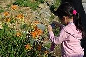 赤科山的金針花:IMGP5272.jpg
