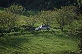 赤科山的金針花:IMGP5297.jpg