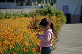 赤科山的金針花:IMGP5298.jpg