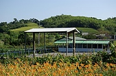 赤科山的金針花:IMGP5245.jpg
