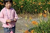 赤科山的金針花:IMGP5274.jpg