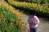赤科山的金針花:IMGP5276.jpg