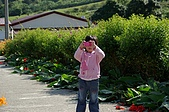 赤科山的金針花:IMGP5277.jpg