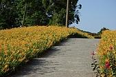 赤科山的金針花:IMGP5226.jpg