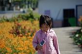 赤科山的金針花:IMGP5303.jpg