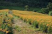 赤科山的金針花:IMGP5227.jpg