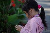 赤科山的金針花:IMGP5322.jpg
