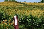 赤科山的金針花:IMGP5391.jpg
