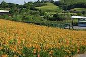 赤科山的金針花:IMGP5228.jpg
